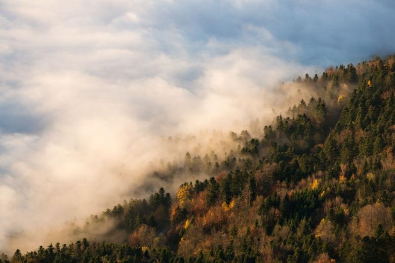 Automn Fog